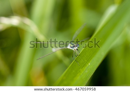 Macro photo of dragonfly sitting on a plant, summer day