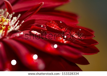 Macro photo of flower with water drop - stock photo