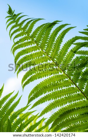 Macro photo of fresh green fern leaf above blue sky - stock photo