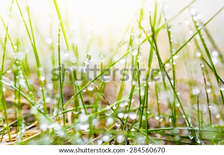 Macro photo of fresh green grass covered by dew at sunny morning - stock photo