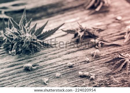Macro photo of fresh marijuana on the grunge wooden desk. Selective focus. Retro filtered. Monochrome cream tone. Black and white photography. - stock photo