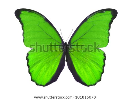 macro photo of green butterfly isolated on white background - stock photo