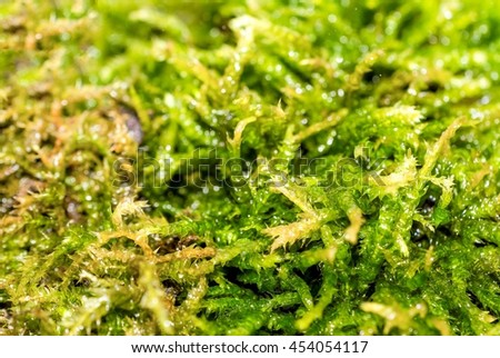 Macro photo of moss in the forest