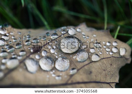 Macro photo of rain drops on brown autumn leaf. Closeup with shallow depth of field. Nature photo. - stock photo