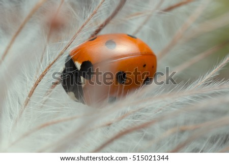 Macro photo of seven-spot ladybug on overblown plant