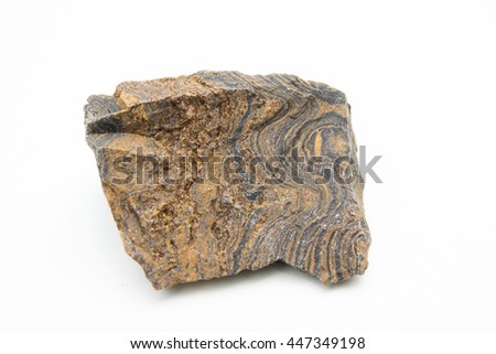 macro photo of Stromatolites isolated over white