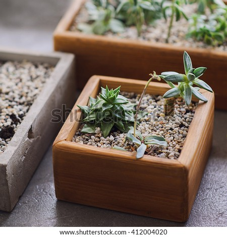 Macro photo of succulents in small plants. Succulents and cactus in different concrete pots. Home decoration. - stock photo