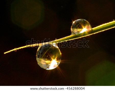 Macro photo of two dew drops on a blade of grass reflecting the sunrise against a nearly black background. - stock photo