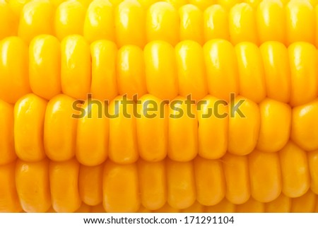 Macro photo of yellow corn background, healthy and tasty food - stock photo