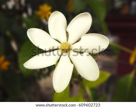 gardenia petal stock images, royaltyfree images  vectors, Beautiful flower