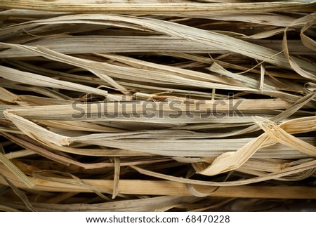 macro picture of dried straw stems