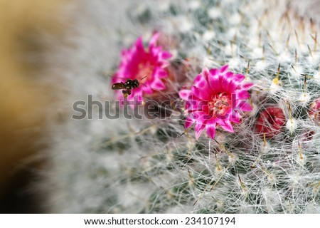 macro pink flower cactus - stock photo