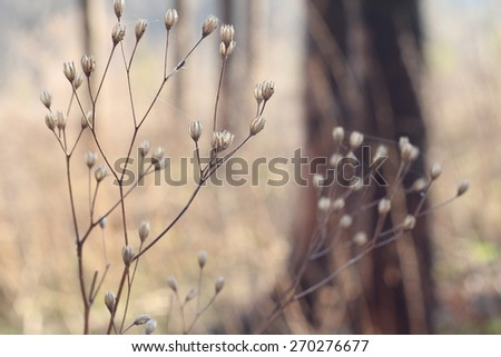 Macro. Plants in forest
