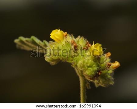 macro pollen - stock photo