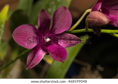 Macro red flowers. Photo Orchid red flowering branches.