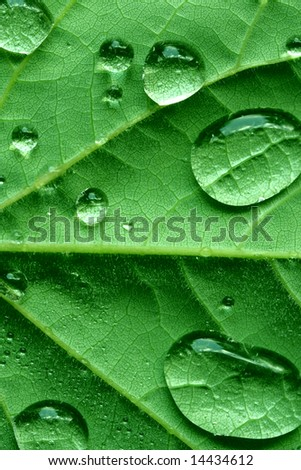 Macro redbud leaf covered with waterdrop
