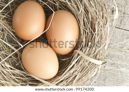 Macro shoot of brown eggs at hay nest in chicken farm - stock photo