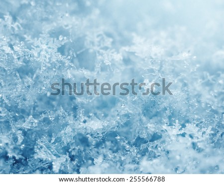 Macro shot from Snowflake - stock photo