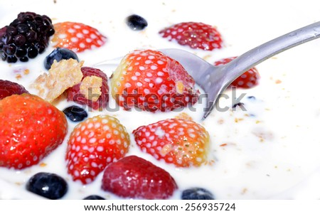 Macro shot of a bowl with cereal and some berries - stock photo