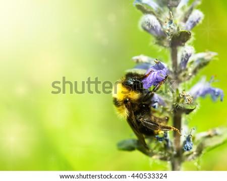 macro shot of a bumblebee - stock photo
