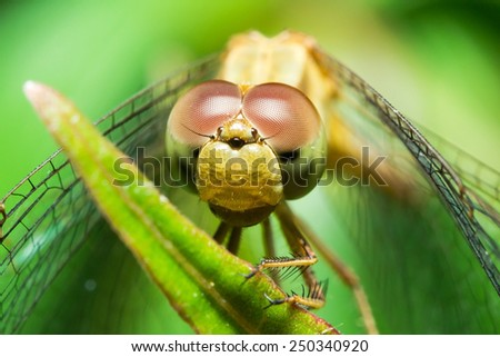 Macro shot of a dragonfly's head - stock photo