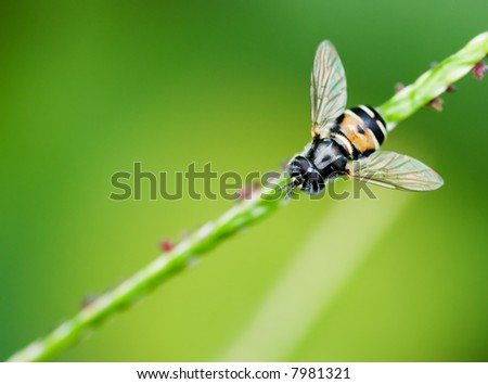Macro shot of a hoverfly