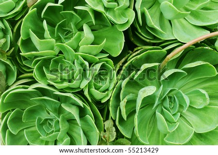 Macro shot of a  lushly green flower plant - stock photo