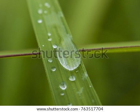 Macro shot of a rain droplet on a blade of green grass, Thailand