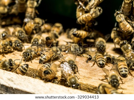 Macro shot of bees are kept in crates.