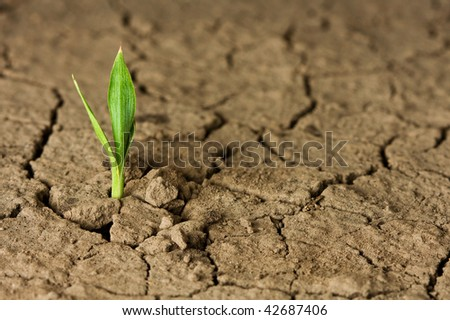 Macro shot of earliest braird on eroded land - stock photo