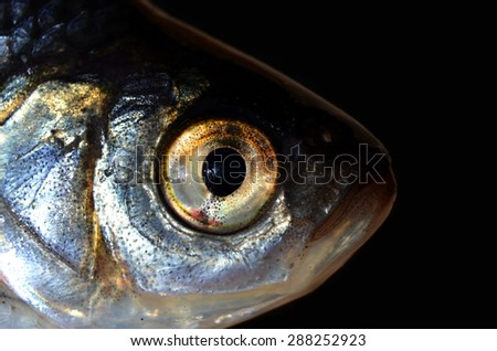 Macro shot of fish head