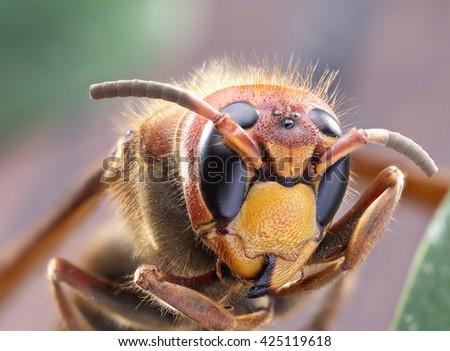 Macro shot of hornet or yellow jacket. - stock photo