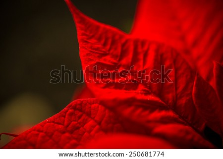 Macro shot of red leave texture over dark background - stock photo