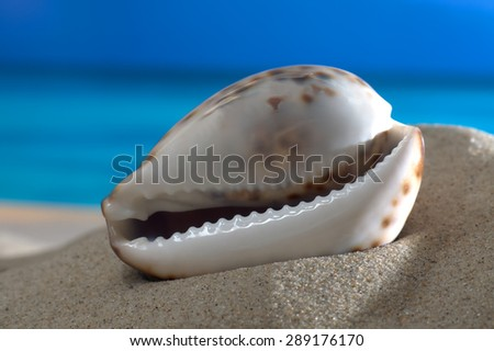 Macro shot shell on the beach in front of an azure sea - stock photo