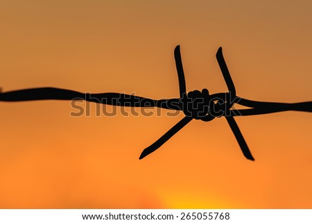 Macro silhouette of Barbed wire on sunset background - stock photo