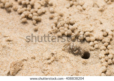 macro small crab dig a hole making sand balls on the beach Thailand - stock photo