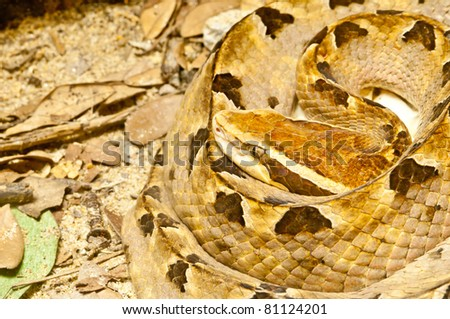 Macro snake in zoo - stock photo