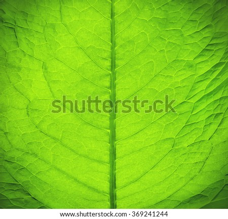 Macro texture of green fresh leaf  - stock photo