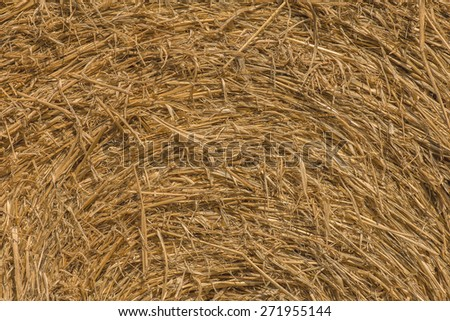 Macro texture of straw in haystack.  - stock photo
