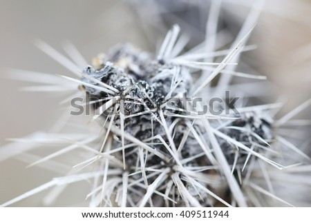 Macro thorn, thorns, close up. Grey background.