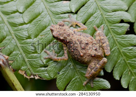 Macro top view shot of a tiny toad on green leaf - stock photo