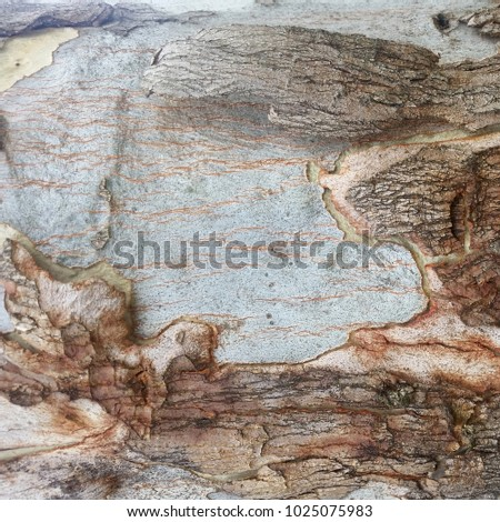 Macro Tree Bark Textures, Abstract Background, Natural textures, Organic background textures