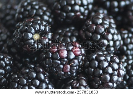 Macro view of a bunch of blackberries (Shallow DOF)