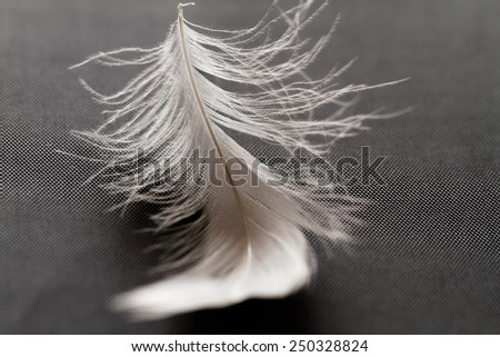 Macro view of a feather on the grey background - stock photo