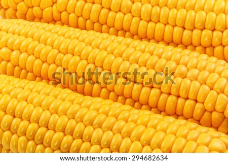 Macro view of fresh yellow sweet corn or maize - stock photo
