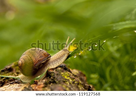 Macro view of snail and water drops after rain. - stock photo