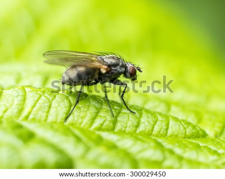 macro view of the fly sitting on green leaf