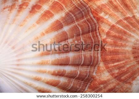 Macro View of Two Seashells Layered - stock photo
