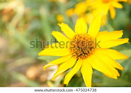 Macro view of yellow flower on a sunny day