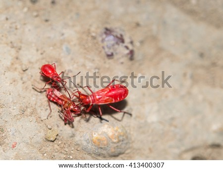 Macro view red insect on rock